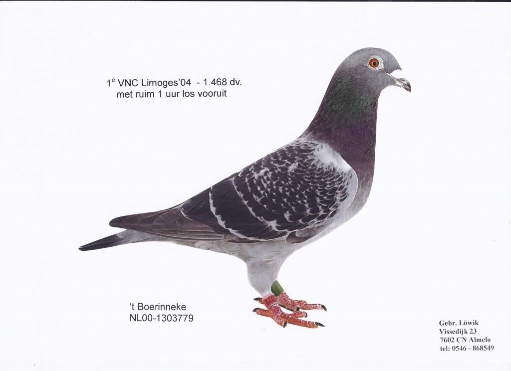 NL00-1303779 Boerinneke