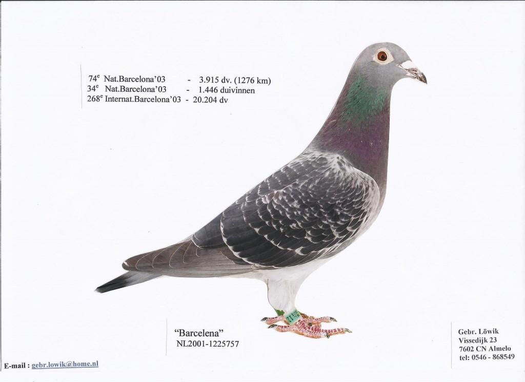 NL01-1125757巴塞罗那