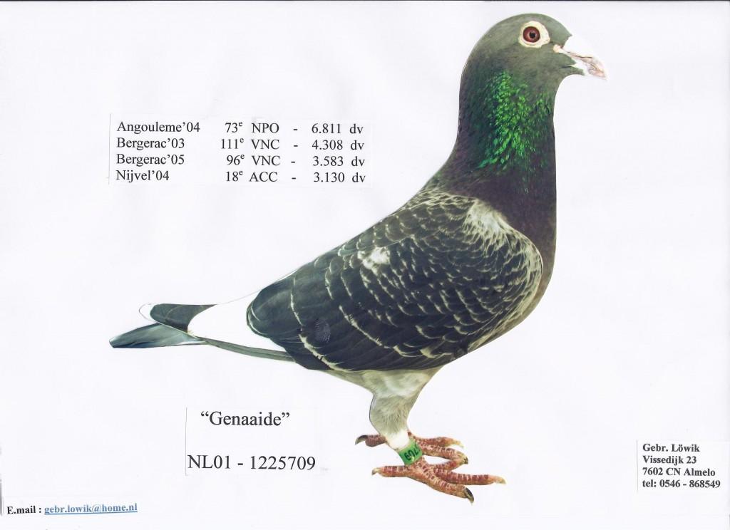 NL01-1225709针织