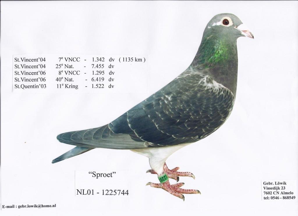 NL01-1225744祛斑