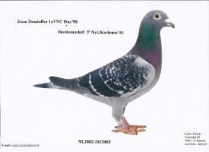 NL02-1013085 Son Daxdoffer x Bordeaux Dove