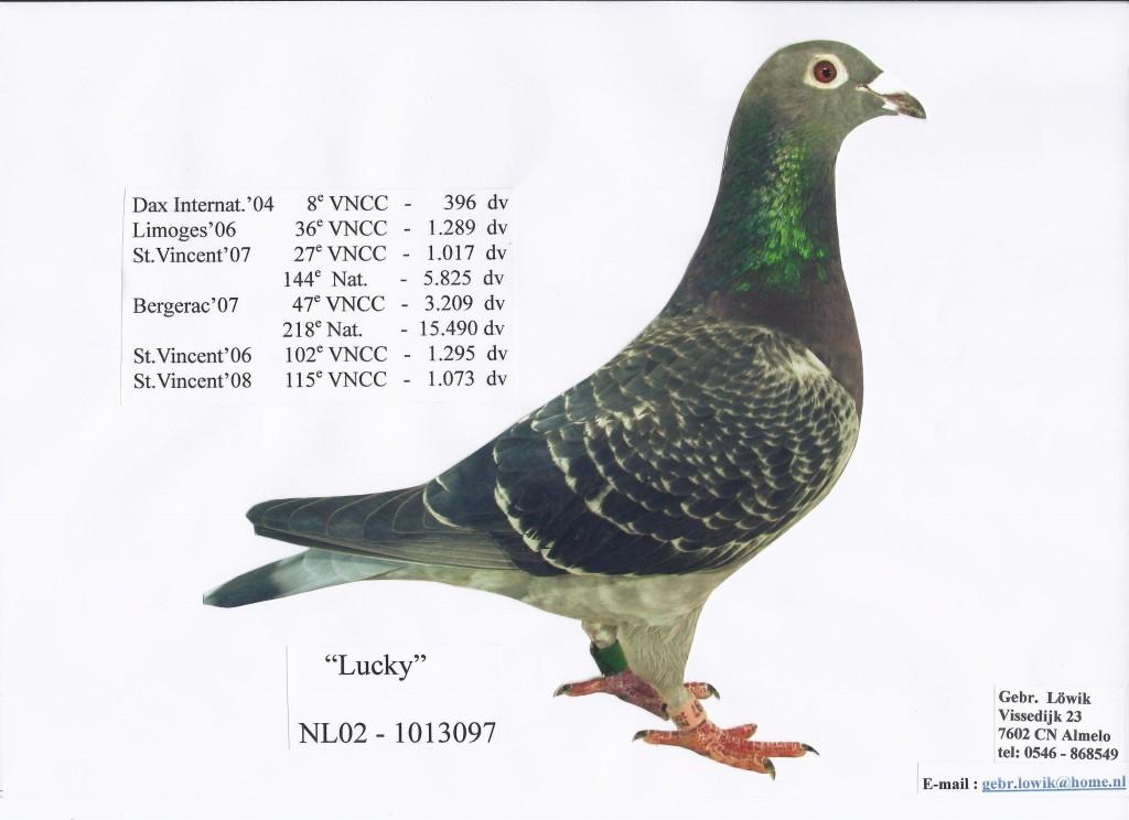 NL02-1013097幸运