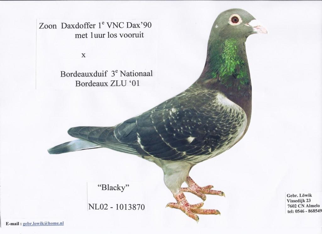 NL02-1013870 Blacky