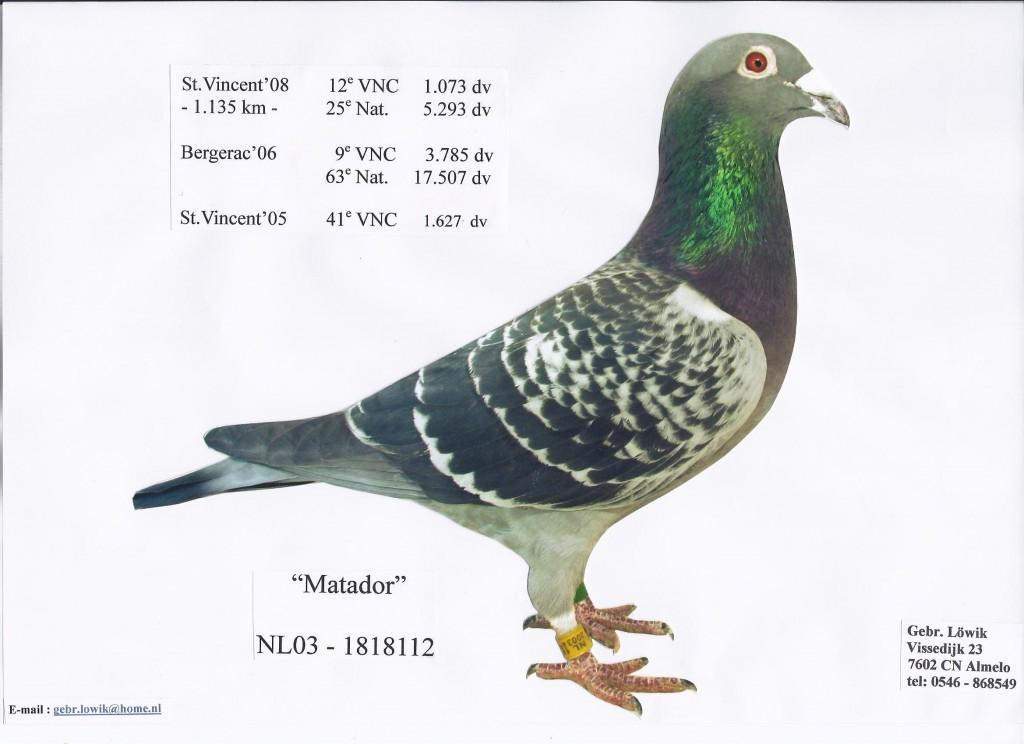 NL03-1818112斗牛士
