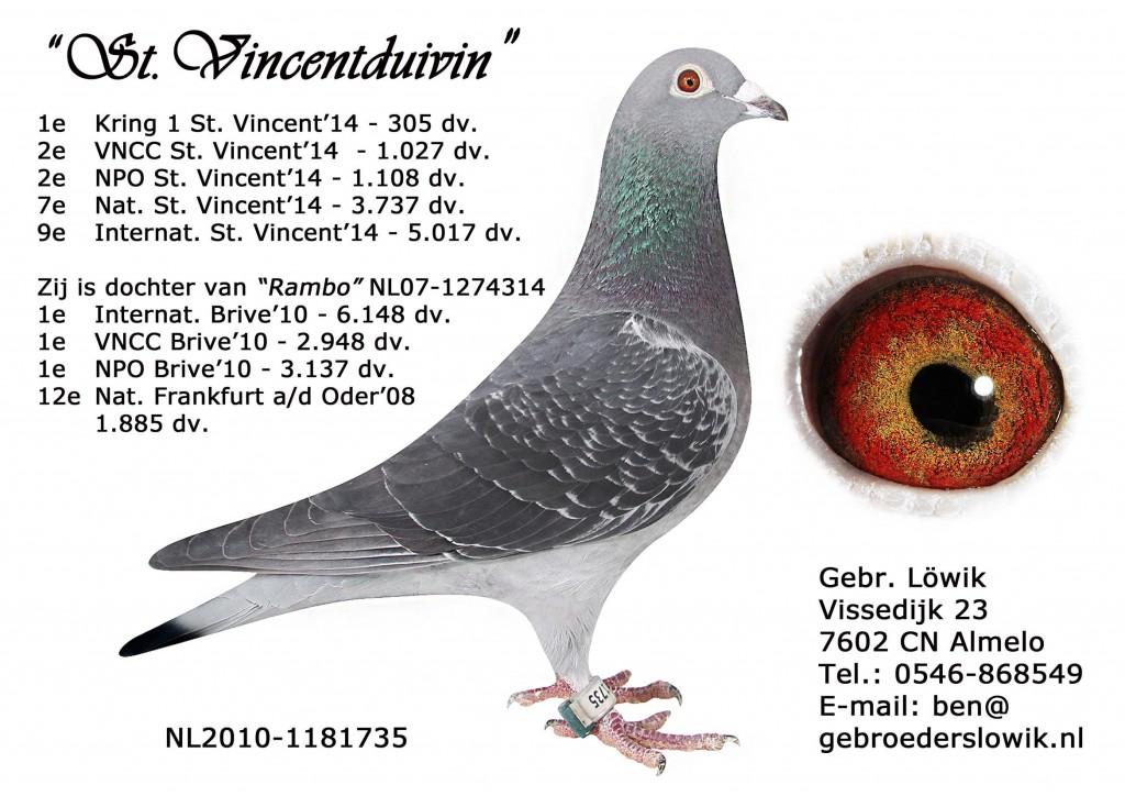 NL10-1181735圣Vincentduivin