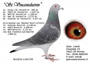 NL10-1181735 St Vincentduivin