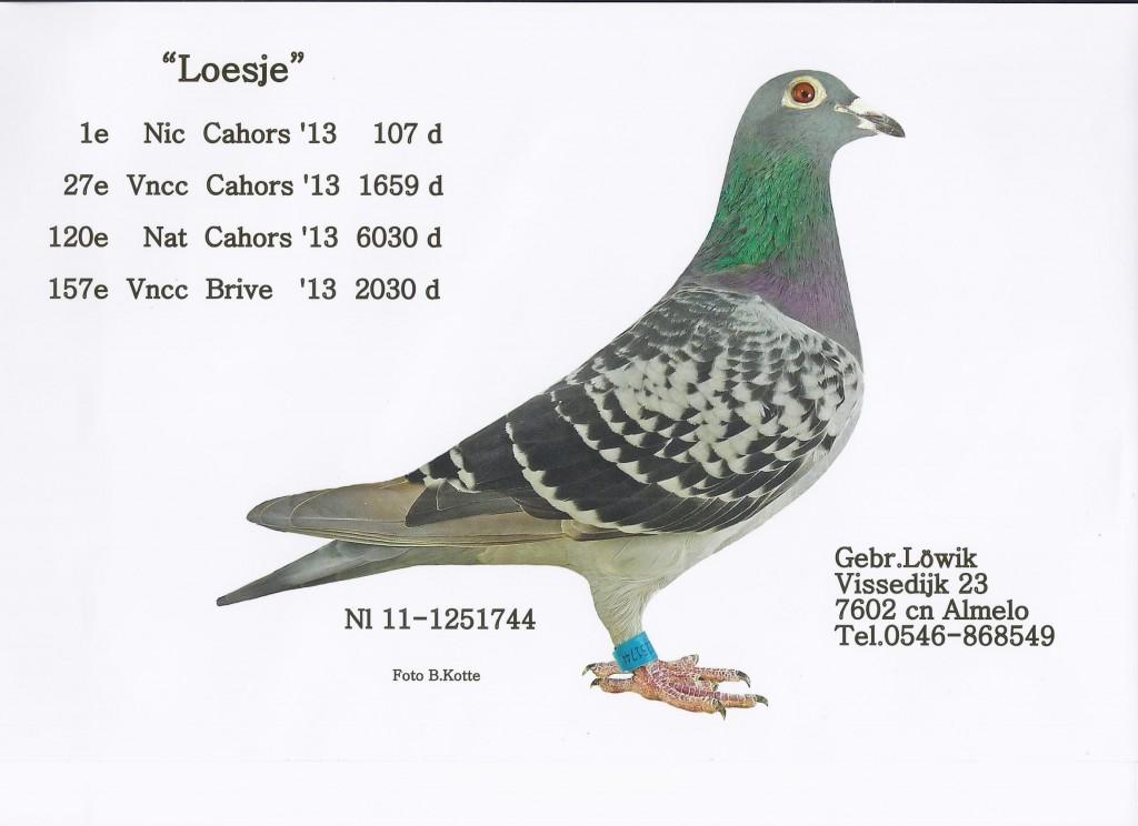 NL11-1251744 Loesje