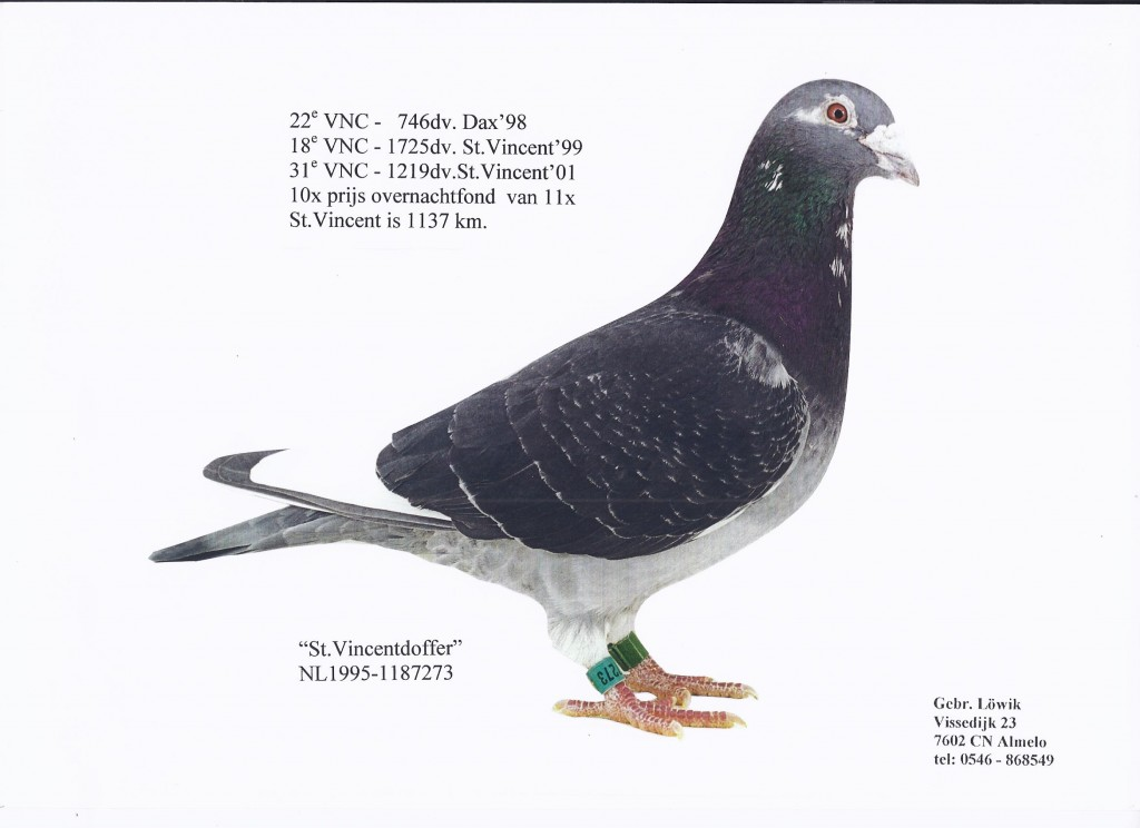 NL95-1187273圣Vincentdoffer